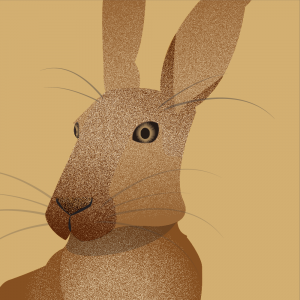 myxomatosis-rabbit